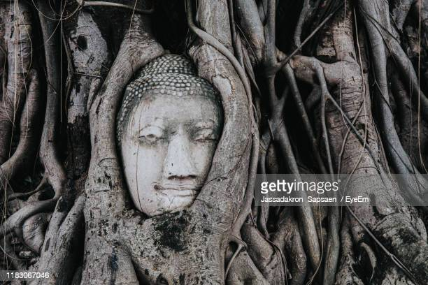 buddha statue in tree trunk - tree trunk stock pictures, royalty-free photos & images