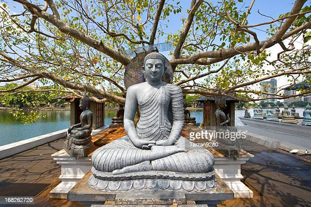 buddha-statue im big tree - sri lanka stock-fotos und bilder