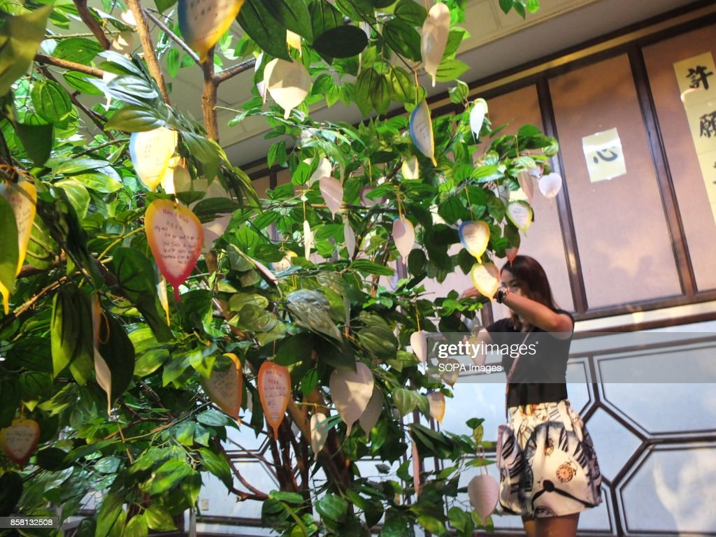 Buddhist Devotee Is Seen Hanging Her Wish Card At A Bodhi Tree Wesak The