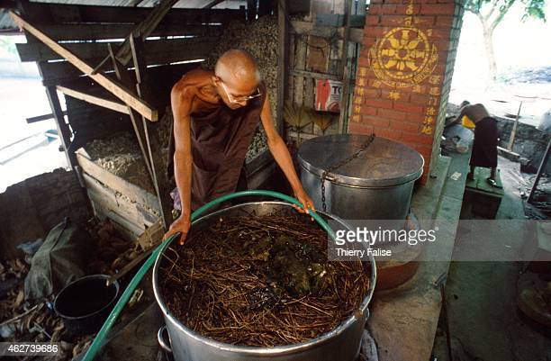 Buddhist monk checks the preparation of a secret potion made with leaves and herbs which will be administrated to patients as part of a drug...