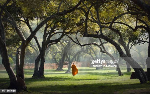buddhist monk - monk stock pictures, royalty-free photos & images
