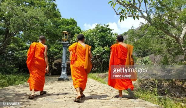 Buddhist monks on their way to the Dambulla cave temple, Sri Lanka