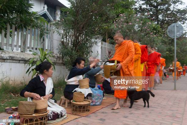 Buddhist monks receiving alms from the people early morning before sunrise in the UNESCO world heritage town of Luang Prabang in Central Laos