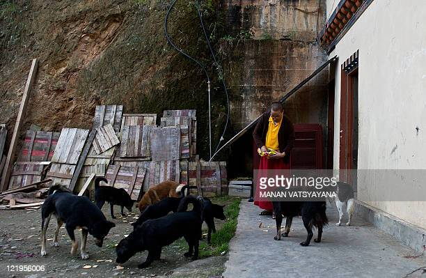 A Buddhist nun feeds dogs at a monastery in Thimphu on August 21 2011 The Kingdom of Bhutan is a small landlocked country in South Asia located at...