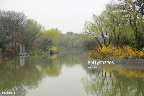 budding willow leaf and yellow winter jasmine along river in the morning mist,yangzhou,china - yangzhou foto e immagini stock
