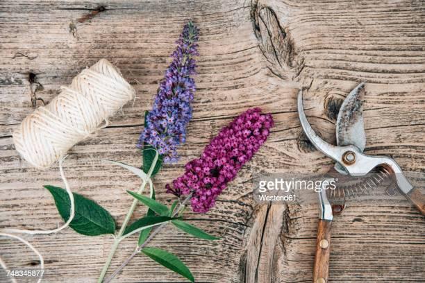 Buddleja flowers with pruner on woodden background