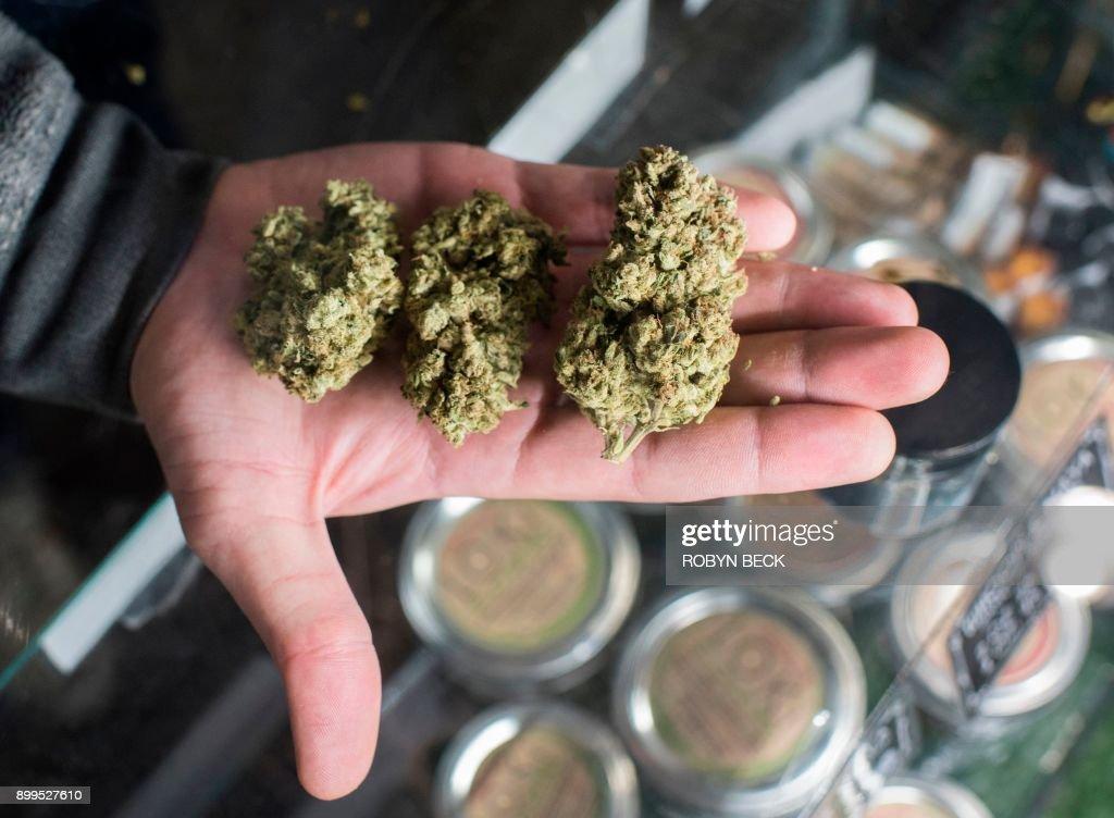 Рудня марихуана комнатный цветок конопля