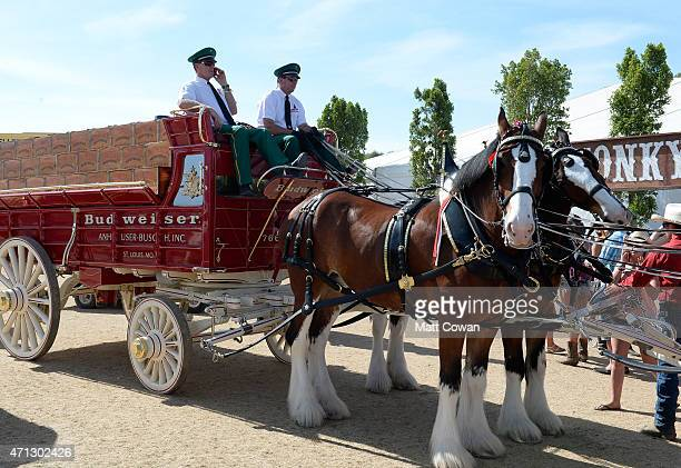 Budweiser Clydesdales attend day three of 2015 Stagecoach California's Country Music Festival at The Empire Polo Club on April 26 2015 in Indio...