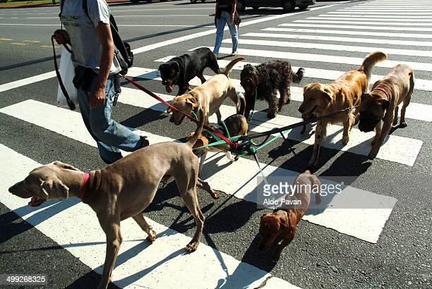 buenos aires, dog sitter - grupo mediano de animales fotografías e imágenes de stock