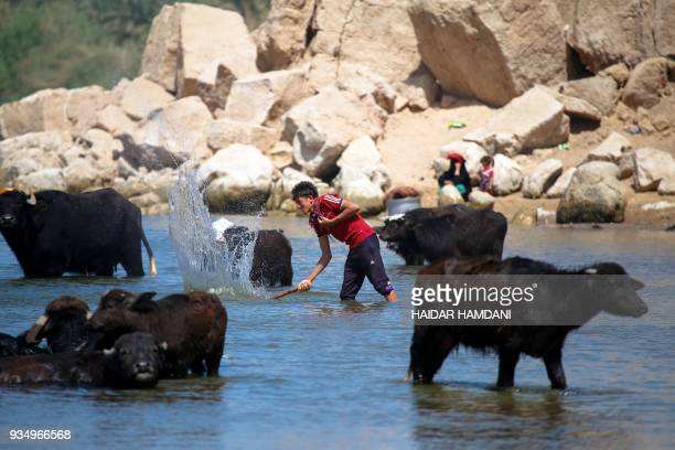 Buffalo breeders oversee their livestock in the Umm Khashm area, some 25 km away from Najaf, on March 20, 2018. / AFP PHOTO / Haidar HAMDANI