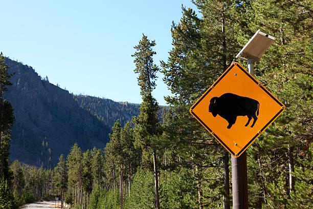 """Buffalo Crossing Sign, Yellowstone National Park"""