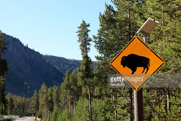 buffalo crossing sign, yellowstone national park - terryfic3d stock pictures, royalty-free photos & images