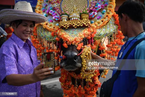 A buffalo in costume is paraded during the annual Chonburi Buffalo Race in Chonburi on October 12 2019 Whipwielding jockeys ride bulls bareback at...