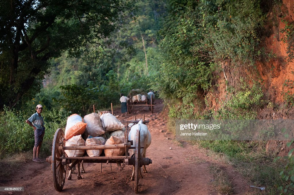 Ox cart in Myanmar : News Photo