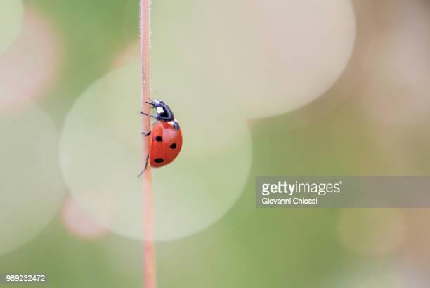 Bug Beauty