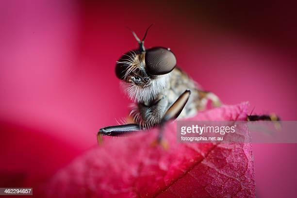 Bug eye view