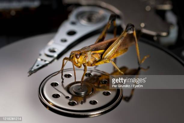 a bug in the machine grasshopper - per grunditz stock pictures, royalty-free photos & images