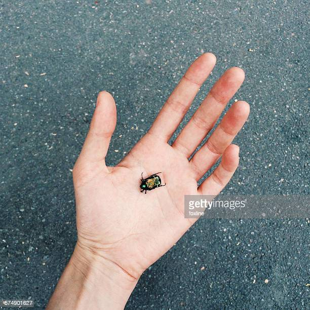bug in the palm of a hand - taken on mobile device stock photos and pictures