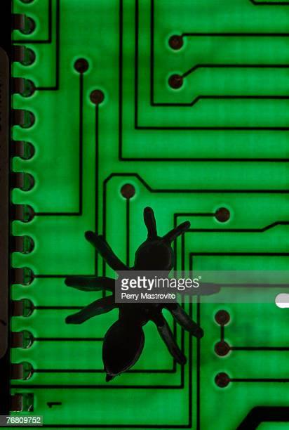 Bug silhouette on circuit board