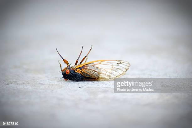 A Bug's Death