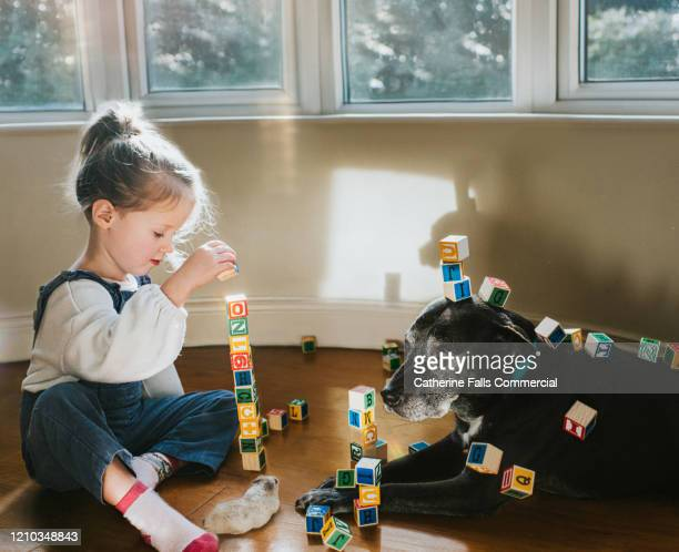 building blocks - toy stock pictures, royalty-free photos & images