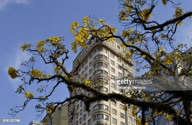Building exterior behind branch with yellow flowers, Curitiba, Brazil