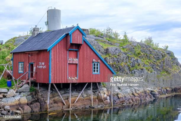 building for produktion of fish oil in å lofoten islands norway - finn bjurvoll foto e immagini stock