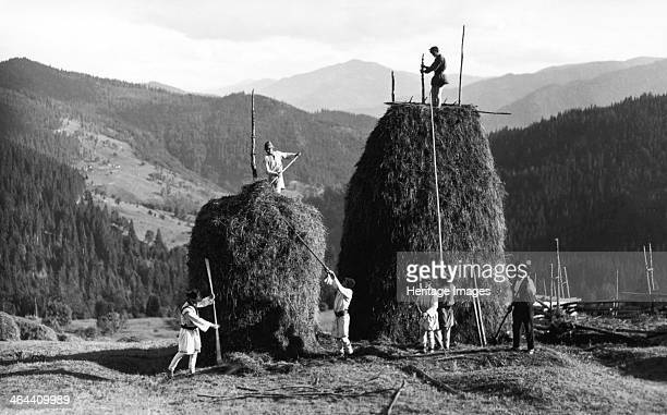 Building haystacks at harvest time Bistrita Valley Moldavia northeast Romania c1920c1945 Depicting customs and traditional labour in the rural...