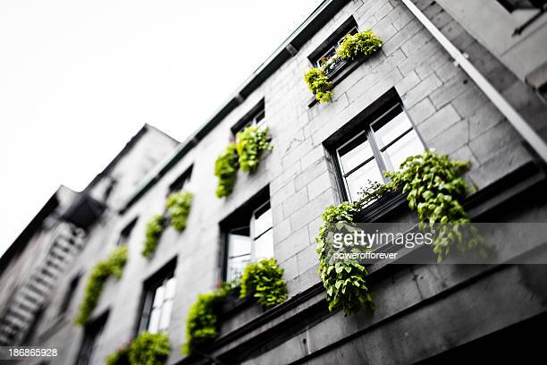 building in old montreal - vieux montréal stock pictures, royalty-free photos & images