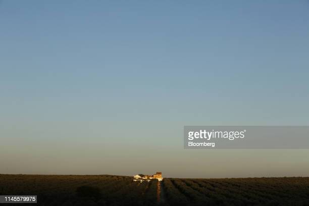 A building stands in an olive grove in La Roda de Andalucia Spain on Wednesday March 13 2019 The relationship between Washington and Madrid is being...