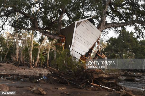 A building uprooted by a massive mudslide is lodgedin a tree in Montecito California January 10 2018 Rescuers used dogs and helicopters to search for...