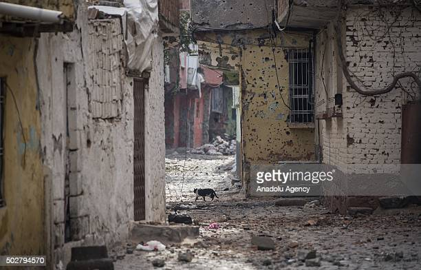 Buildings damaged are seen in a neighbourhood under curfew for about a month as troops conduct counterterrorism operation in Turkeys southeastern...