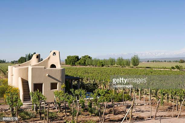 buildings in vineyard - argentina stock pictures, royalty-free photos & images