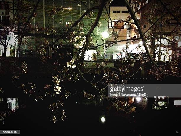 Buildings Seen Through Apple Blossom Tree At Night