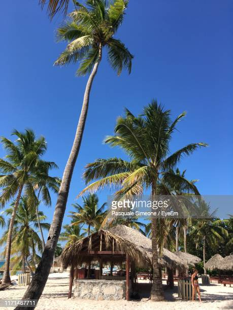 built structure by palm trees at beach against sky - simeone stock pictures, royalty-free photos & images