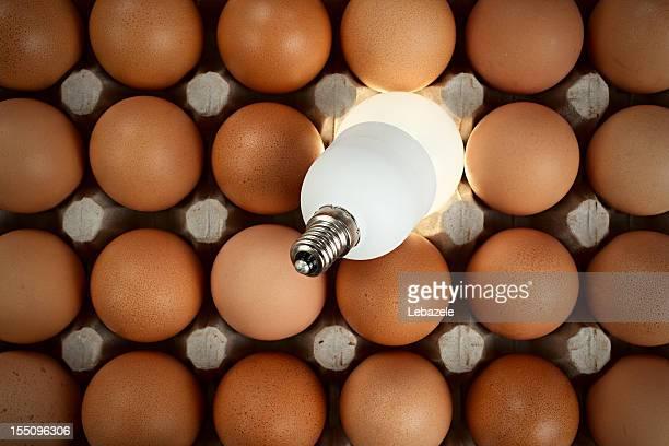 Bulb among eggs