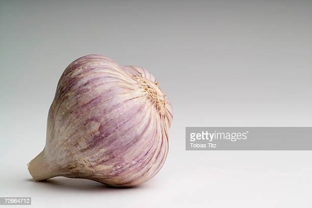 bulb of garlic - cabeza de ajos fotografías e imágenes de stock
