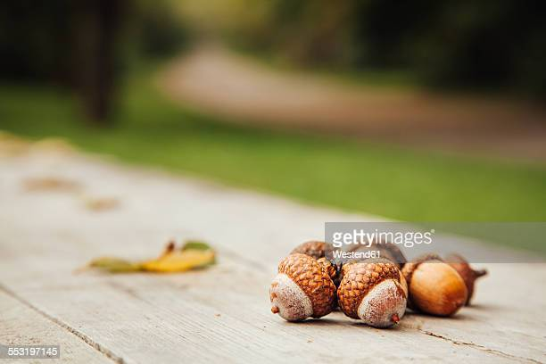 Bulgaria, Sofia, acorns on wooden bench in a park