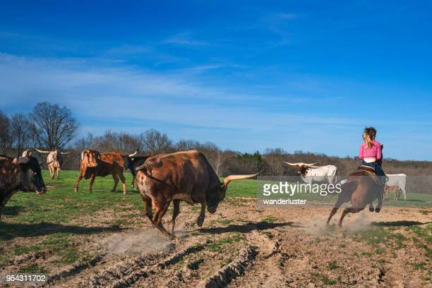bull charges female rancher on horseback - female animal stock pictures, royalty-free photos & images