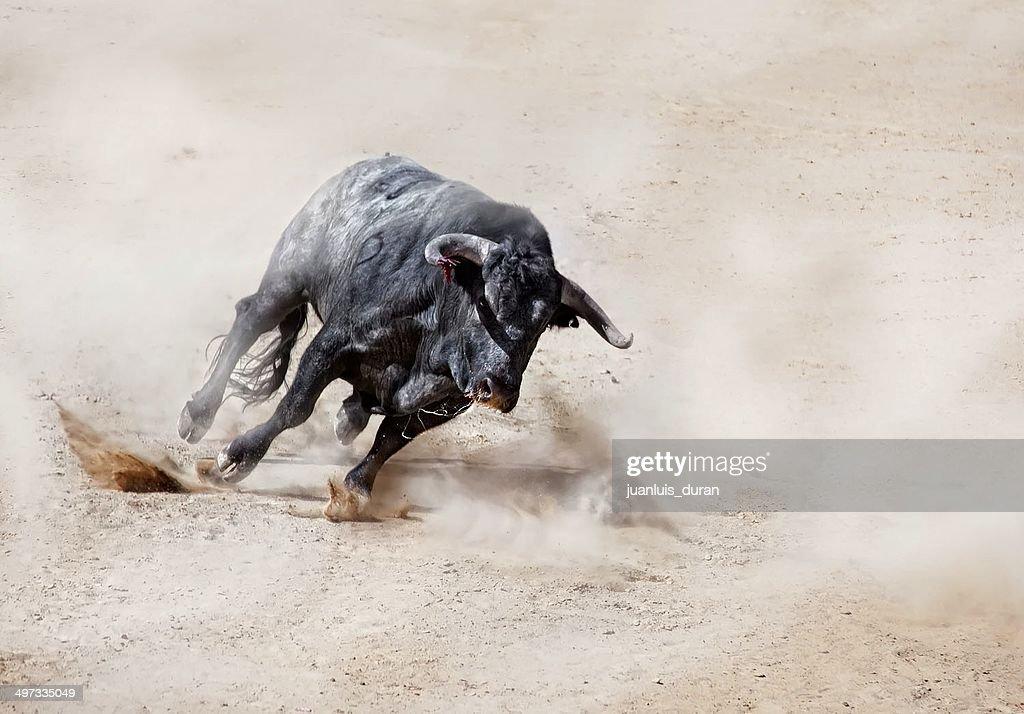 Carregamento de touro na areia criação de nuvem de pó : Foto de stock