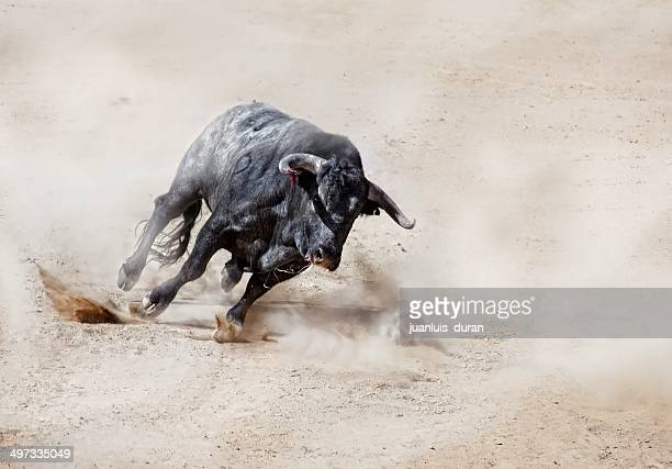 bull charging across sand creating dust cloud - bull animal stock photos and pictures