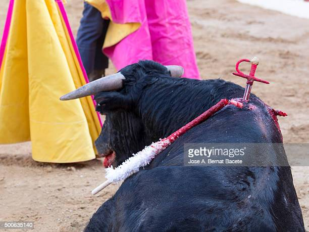 bull died in a bullfight - stab wound stock pictures, royalty-free photos & images