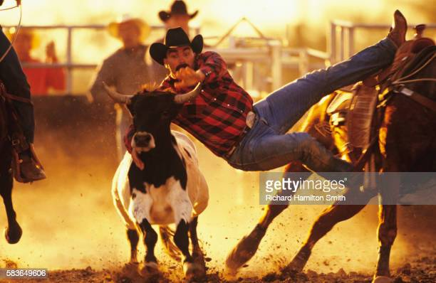 bull dogging in arizona - dogging stock pictures, royalty-free photos & images