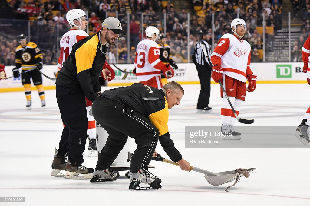 Bull gang members pick up an octopus off the ice during the third period of the Boston Bruins against the Detroit Red Wings at the TD Garden on April 7, 2016 in Boston, Massachusetts.