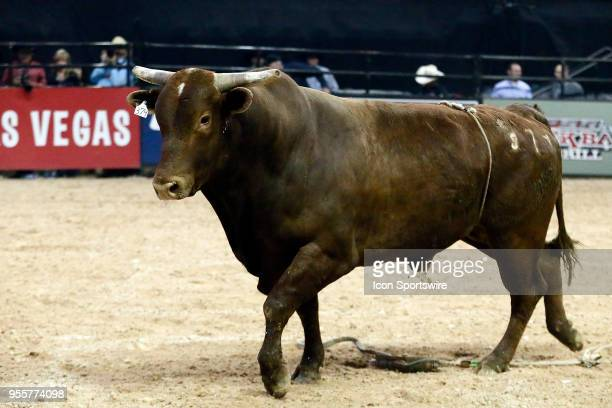 Bull Hot Habanero is seen during round one of the Professional Bull Riders Last Cowboy Standing presented by Ariat on May 4 at Thomas and Mack Center...