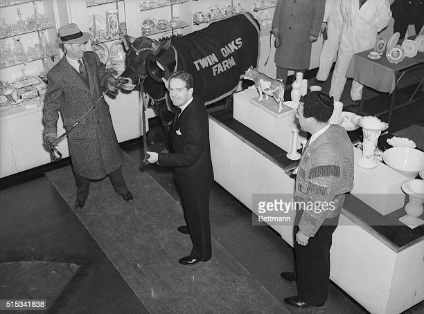 A 'bull in a china shop' became a reality when orchestra leader Fred Waring led a bull through a china shop in New York City December 12 1939 Waring...