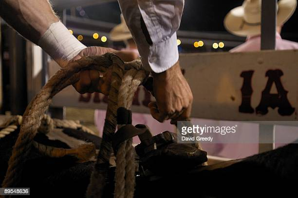 A bull is readied to ride by a cowboy at the Sidney Championship Rodeo on July 31 2009 in Sidney Iowa Celebrating its 75th year the rodeo attracts...