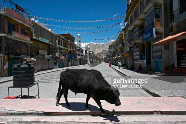 Bull is seen at a closed market amid concerns over the spread of the COVID-19 coronavirus in Leh, the joint capital of the union territory of Ladakh,...