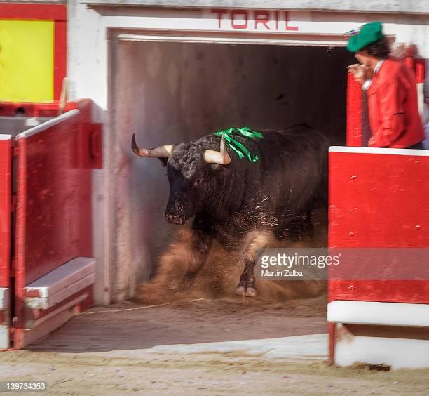Bull leaving bullpen
