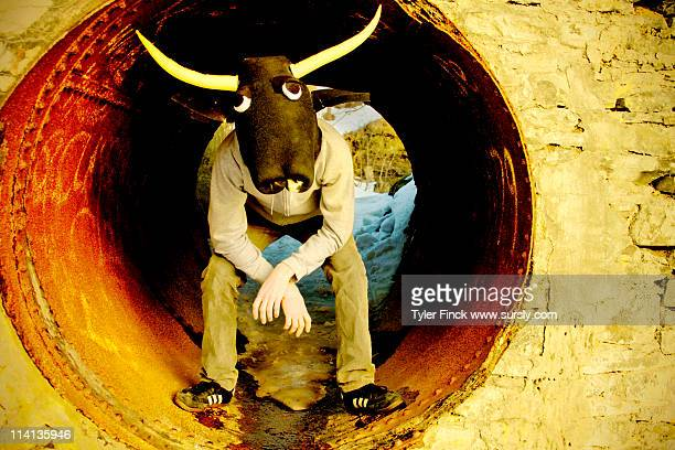 bull man - sursly stock pictures, royalty-free photos & images